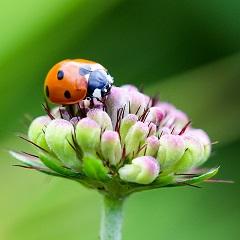 A bogarak egy része teljesen ártalmatlan, kézzel is nyugodtan meg lehet őket fogni, s nem baj, ha ránk száll.
