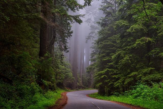 Radwood nemzeti park