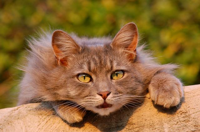 ideges macska